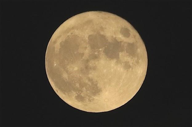 満月です~♪