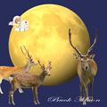 7月の満月~♪