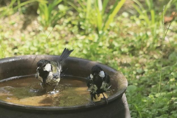 親子で水浴び~♪
