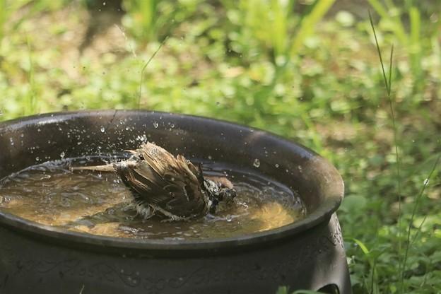 Photos: 水浴びは気持ちいいね~♪