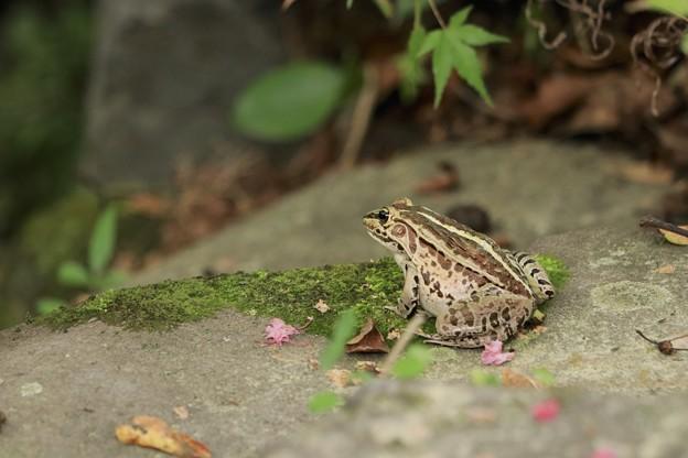 Photos: カエルさん~♪