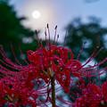 Photos: 花と月
