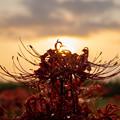 Photos: 花と太陽