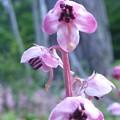 Photos: 花のはわかりませんが可愛かったので写しました。山野草です。