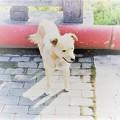 ベージュの自由犬
