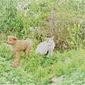 Photos: 子猫と子犬