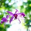緑地公園散歩 鶴見緑地咲くやこの花館