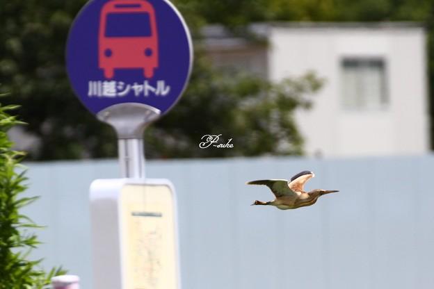 Photos: バスなんか待ってられるか~^^