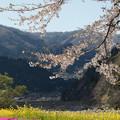春大盛り!!