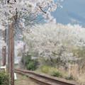 桜に囲まれて!!