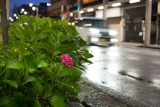 夜の雨上がり