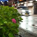 Photos: 夜の雨上がり