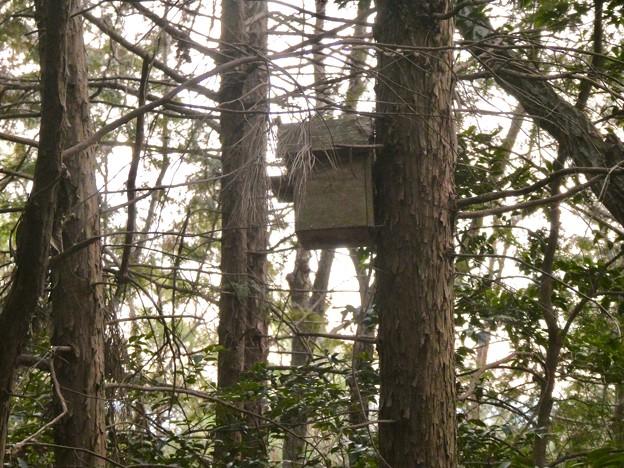 小牧市ふれあいの森の木に設置されてた巣箱 - 1