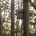 Photos: 小牧市ふれあいの森の木に設置されてた巣箱 - 1