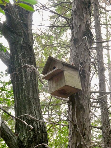 小牧市ふれあいの森の木に設置されてた巣箱 - 2