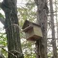 Photos: 小牧市ふれあいの森の木に設置されてた巣箱 - 2