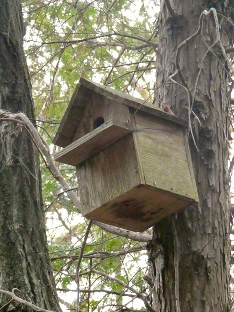 小牧市ふれあいの森の木に設置されてた巣箱 - 3