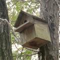 Photos: 小牧市ふれあいの森の木に設置されてた巣箱 - 3