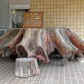 愛知県森林公園 展示館 - 10:入り口横に展示されてた大きな杉の切り株