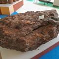 愛知県森林公園 展示館 - 5:展示されてる亜炭