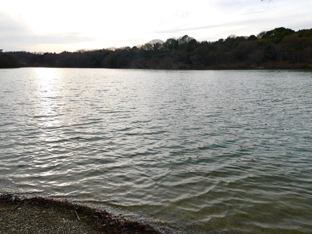 愛知県森林公園 植物園:岩本池 - 3