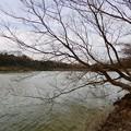 愛知県森林公園 植物園:岩本池 - 4