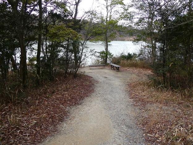 愛知県森林公園 植物園:岩本池南側の野鳥観察地 - 1