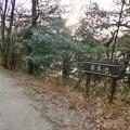 愛知県森林公園 植物園:岩本池 - 1