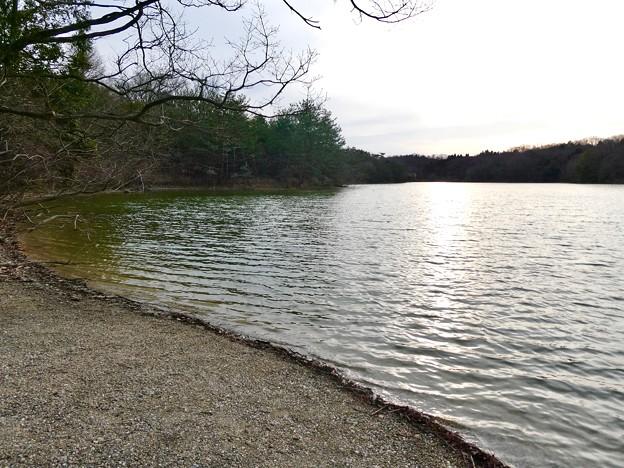 愛知県森林公園 植物園:岩本池 - 2