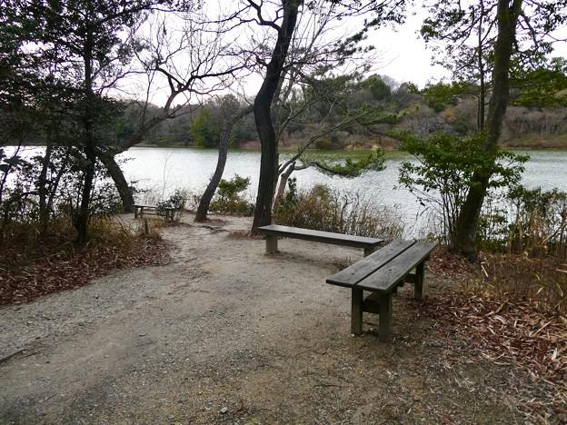 愛知県森林公園 植物園:岩本池南側の野鳥観測値 - 2
