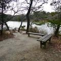 愛知県森林公園 植物園:岩本池南側の野鳥観察地 - 2