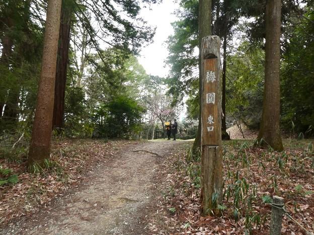 愛知県森林公園 植物園:梅園 - 1(東口)