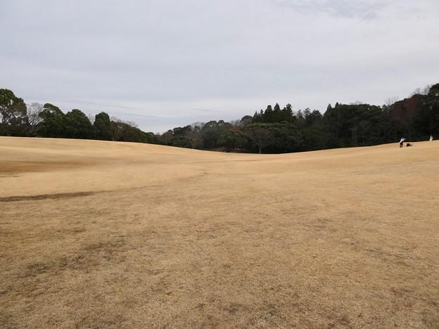愛知県森林公園 芝生広場 - 7