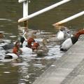 誰かが置いた食べ物に集まっていた水鳥とカラス - 2