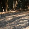 東谷山の登山道にいたソウシチョウ - 8