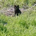 草むらにいた黒猫