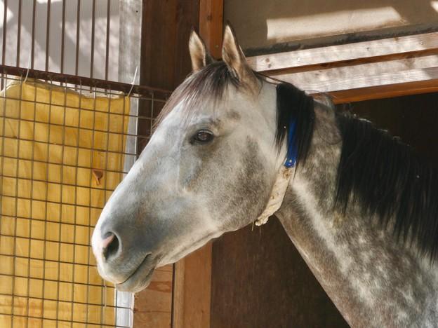凛々しい馬の顔