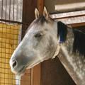 Photos: 凛々しい馬の顔