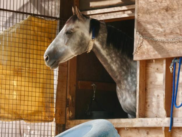 凛々しい顔の馬