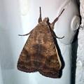 神秘的な模様のある蛾