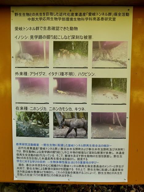 愛岐トンネル群 2021 春の一般公開 - 109:野生生物の情報