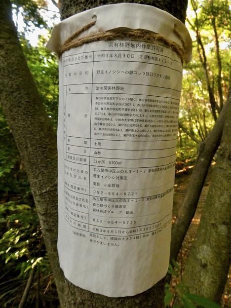 弥勒山麓:イノシシ向けの豚コレラ経口ワクチンの散布 - 3
