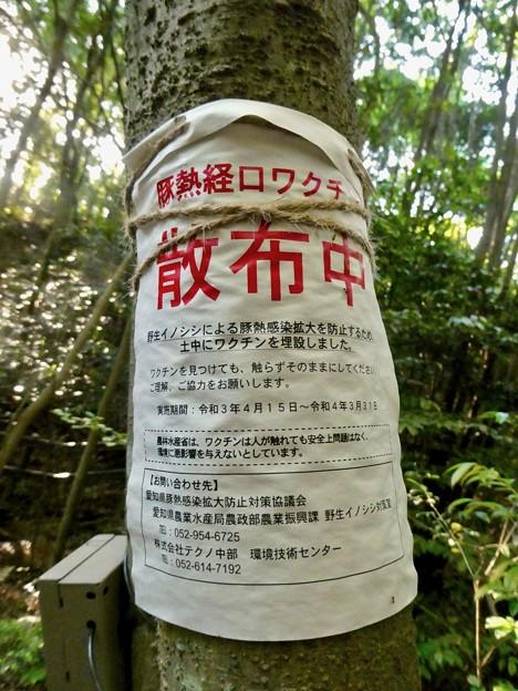 弥勒山麓:イノシシ向けの豚コレラ経口ワクチンの散布 - 2