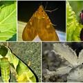 最近見かけた派手な昆虫 - 1