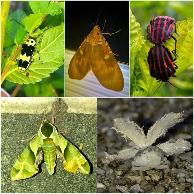 最近見かけた派手な昆虫 - 2
