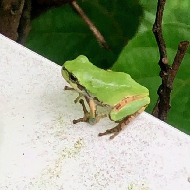 ガードレールの上にいたカエル - 2
