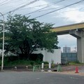 桃花台線解体工事 上末~桃花台西駅間(2021年7月10日) - 2