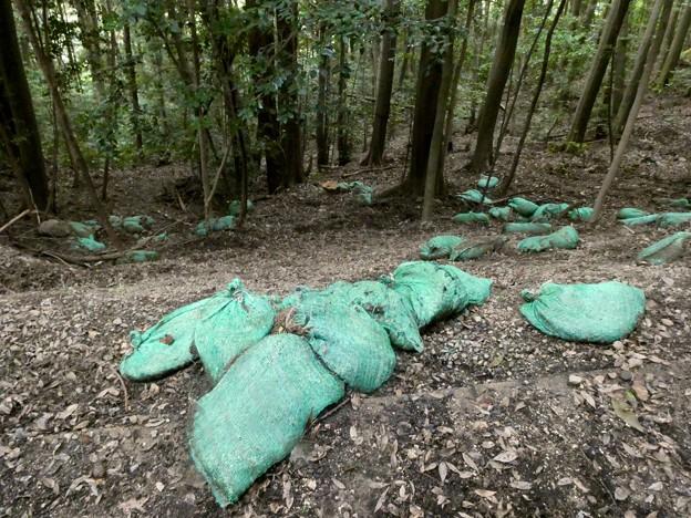 雨が理由か土嚢が崩れてた弥勒山の登山道(2021年7月12日) - 1