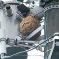 電信柱の上に作られてた大きなススメバチの巣 - 2