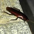 駐車場にいたゴキブリ - 3